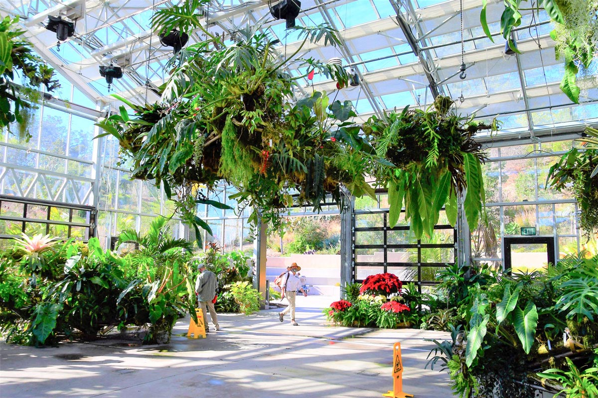 plant chandeliers