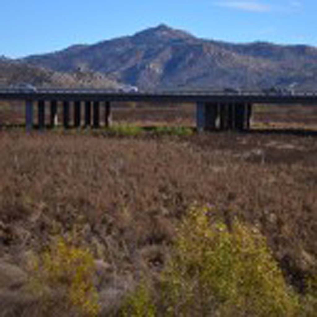 Motorists travel across a span of bridge on Interstate 15, where in the past water from Lake Hodges would be, but has since sprouted a small forest of shrubs, trees and brush. Photo by Tony Cagala
