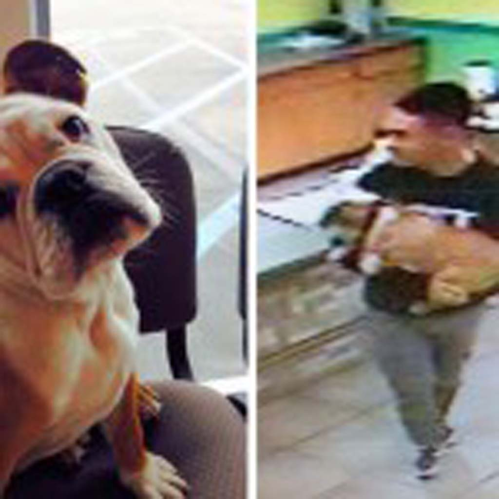Crime Stoppers and the San Diego County Sheriff's Department are seeking the suspect on the right in connection with a dog theft on March 19. Photo courtesy of Crime Stoppers