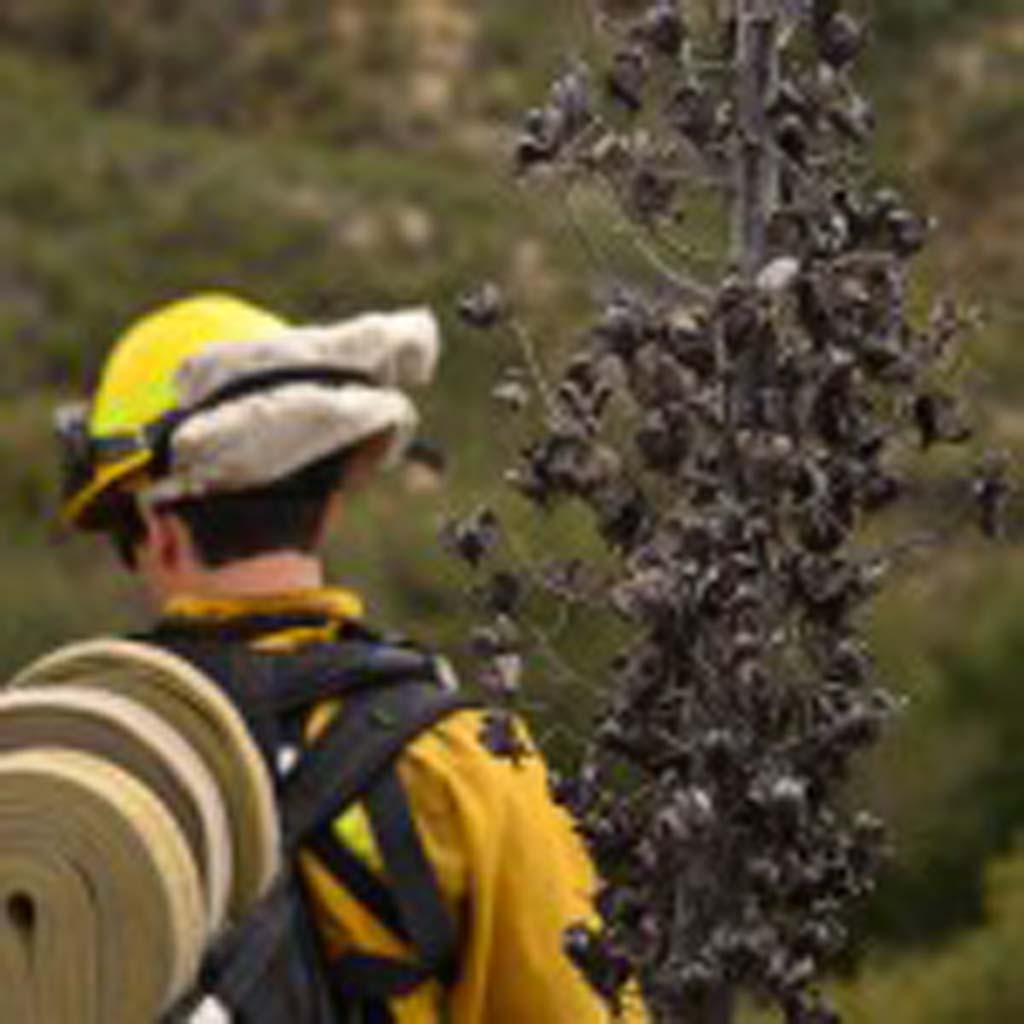 A firefighter participates in a wildfire training exercise earlier this month. The green tops of brush mask the dry conditions in the county's valleys and terrain. Photo by Tony Cagala