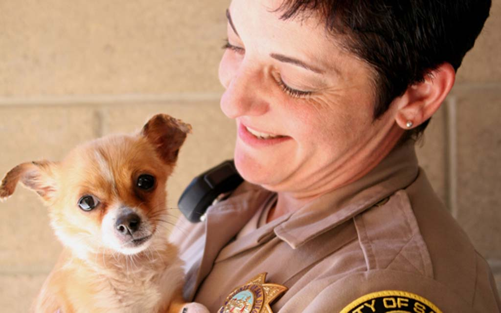 County Animal Services is using a new app to identify lost dogs and reunite them with their owners. Photos courtesy of County Animal Services