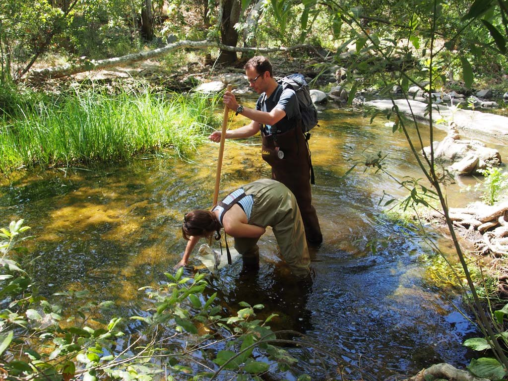 Escondido Creek serves as one of the sites where researchers and trained volunteers collected bugs to help tell a new story on the health of watersheds. Photo courtesy of San Diego Coastkeeper