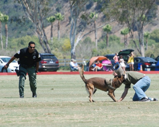 K9 Officer Gonzo apprehends decoy and professional dog trainer David Greene. Photo by Susan White