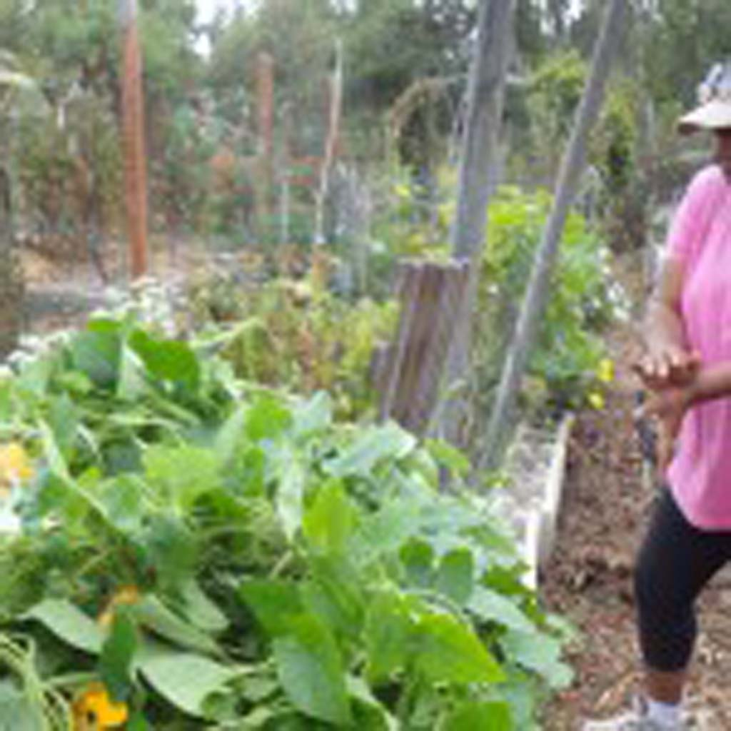 Stacy Weber tends to her plot in the Escondido Community Garden during the annual clean up which happens once a season. Photo by Ellen Wright