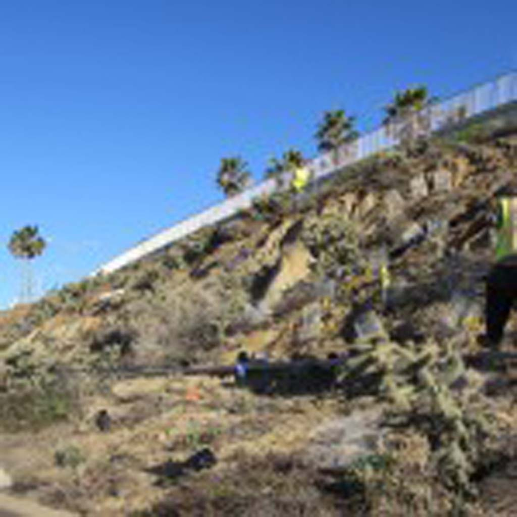 As part of a yearlong maintenance agreement, the city spent $1 million improving the beach bluff and amenities. Non-native plants were taken out and filled four dumpsters according to Councilman Mark Packard. Native species were introduced to reduce erosion. Photo by Ellen Wright