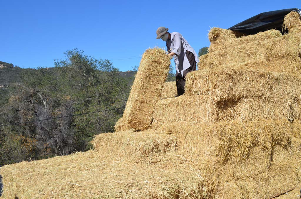 Sister Mai gets a bale of straw ready for the construction site. Photo by Tony Cagala