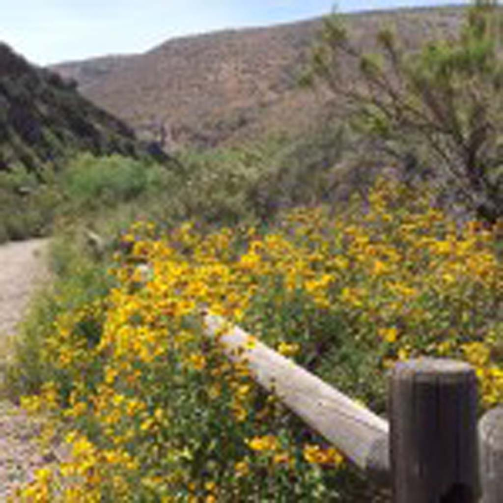 Despite the lack of rain this winter, there are patches of wildflowers at the 6,800-acre Mission Trails Regional Park, just 8 miles east of San Diego's downtown. These were found on the 1.4-mile Visitor Center Loop.