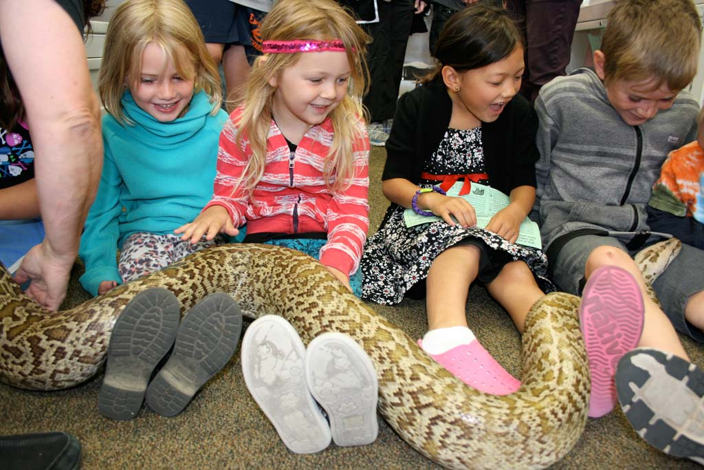 Anneliese Dourson, 5, of Carlsbad (second from left), and Aki Loop, 7, of Oceanside (third from left), sit is in awe as a Burmese python makes it way across their laps. Hands-on fun connected kids with nature. Photo by Promise Yee