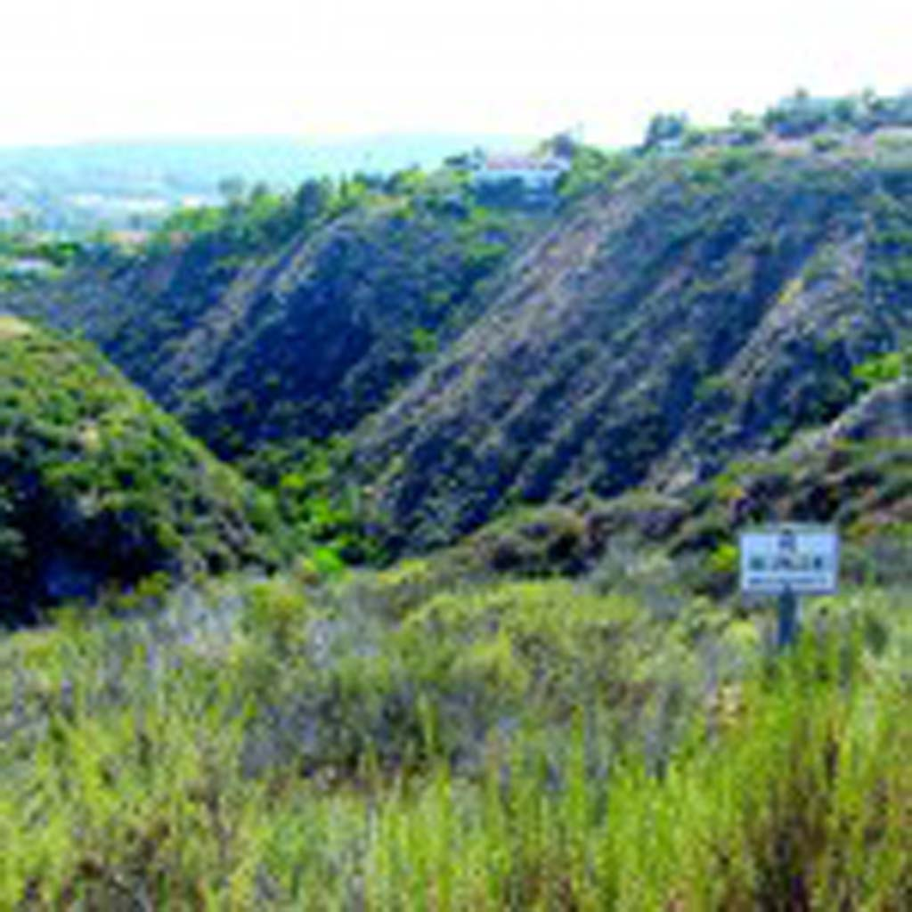 Box Canyon is inside the Rancho La Costa Preserve area. When the weather warms up, teens and young adults are drawn to the canyon to swim and sometimes cliff jump. Photo by Ellen Wright