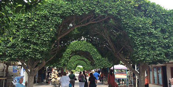 Leafy ficus trees have been trained to form a shady arcade down Loreto's main street, the town's main shopping district. It offers many stores selling local crafts and clothing. There are several excellent seafood restaurants, too. Photo by Jerry Ondash