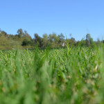 The city of Encinitas looks to be in line for receiving a grant to replace grass with artificial turf at Leo Mullen Sports Park. Photo by Tony Cagala