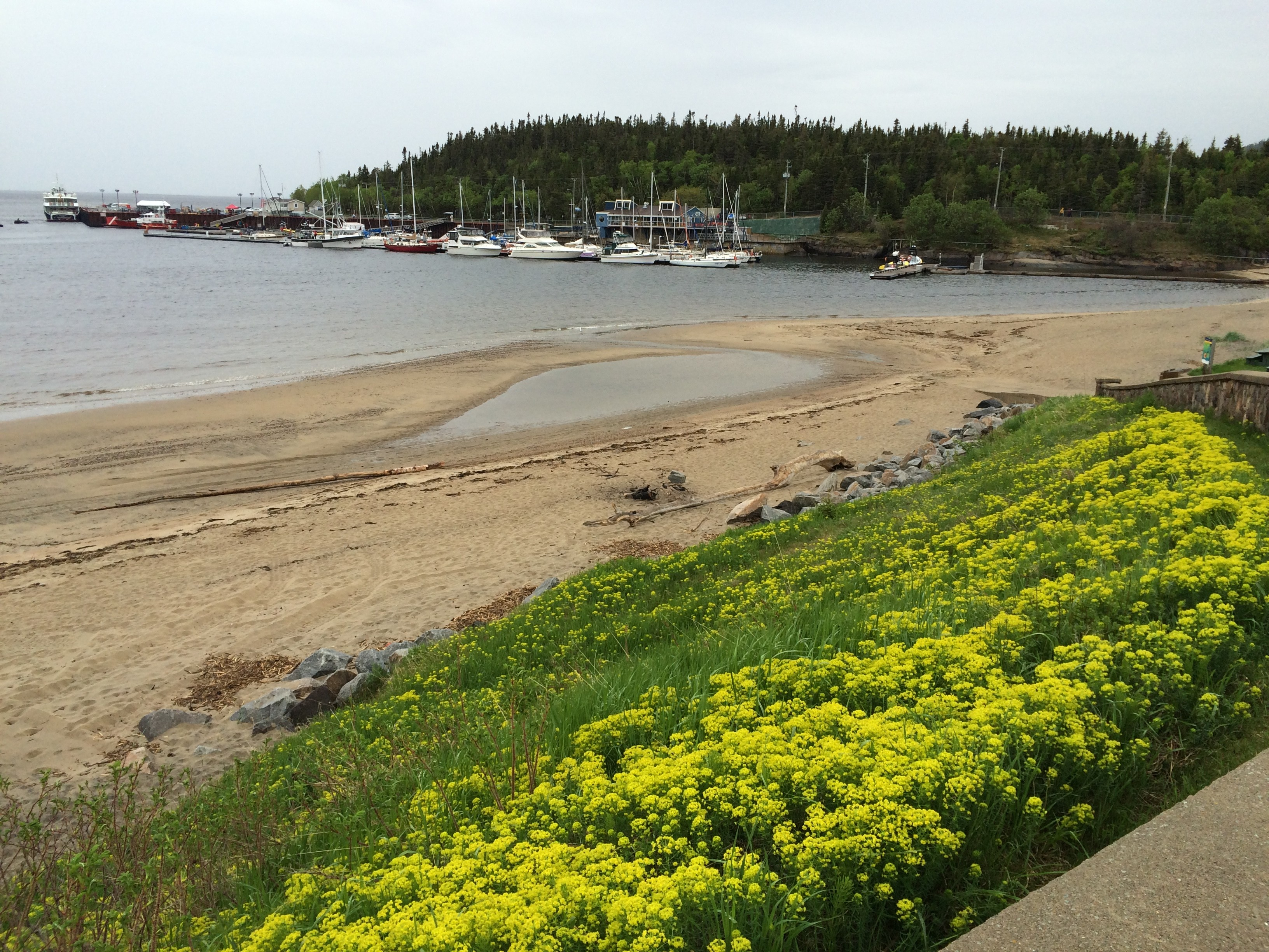 Even on a cool, misty, early-June day, Tadoussac's beach and wildflowers are beautiful. Summer comes late to the town, which is located where the Saguenay River meets the St. Lawrence. Nearby is a spectacular fjord cut by glaciers thousands of years ago. Photos by E'louise Ondash