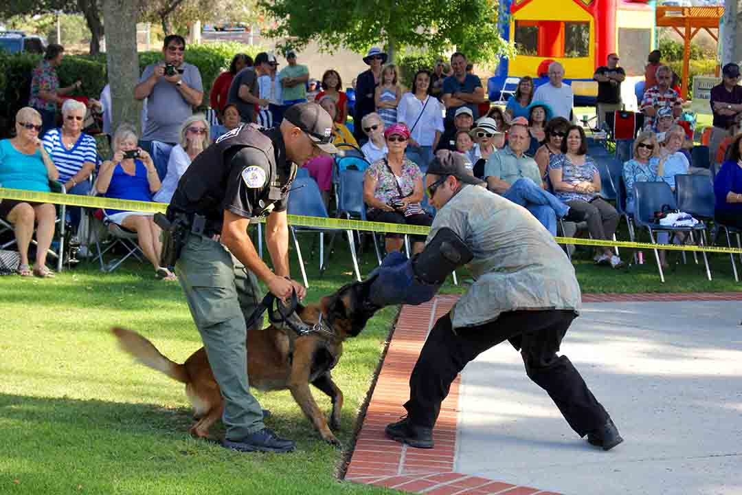 Left, Officer Kevin Wilson with police K-9 Talik and Officer Frank Wagner perform a demonstration for the crowd. Earlier this month Oceanside K-9 team took third place overall in Bakersfield K-9 Trials. Photo by Promise Yee