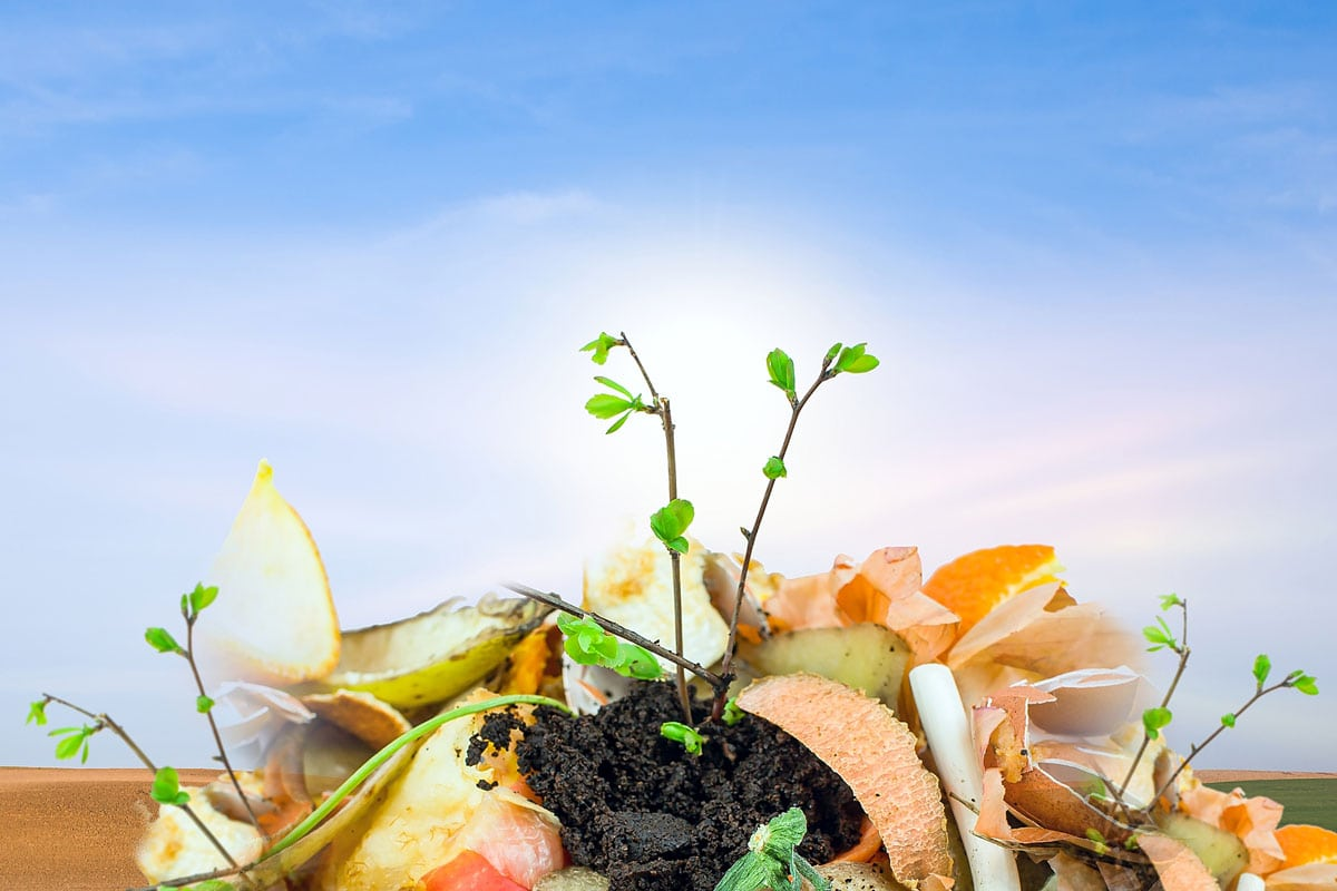 The city's draft Sustainable Materials Management Plan will address green and organic waste as required under a new state law. Courtesy photo