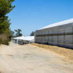 A row of empty greenhouses are all that remain at the Encinitas farm site formerly occupied by Cultivaris Hemp.