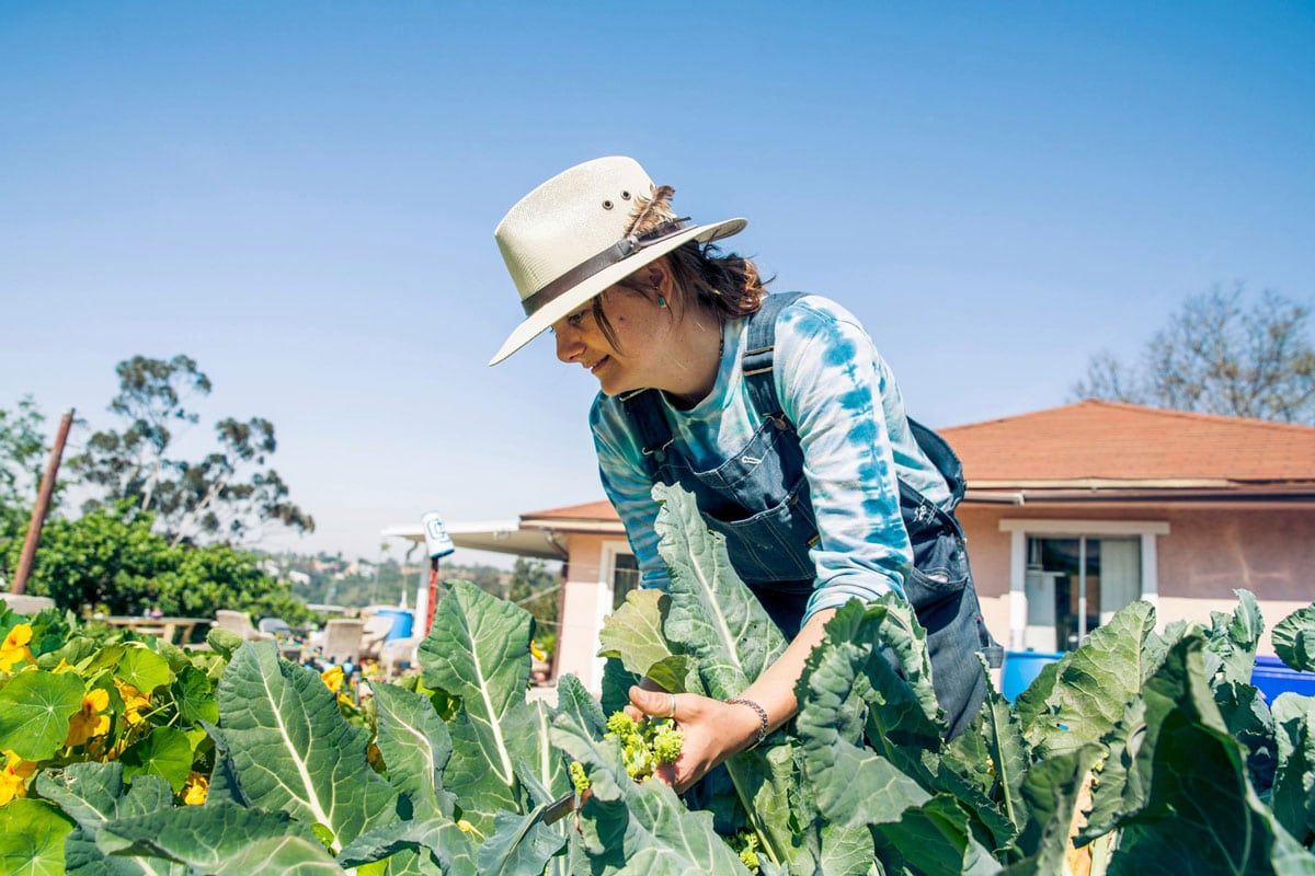 Brijette Peña, owner and founder of San Diego Seed Company, has a small plot in Ramona where she and her husband grow a variety of seeds using sustainable farming practices. Photo via Facebook/San Diego Seed Company